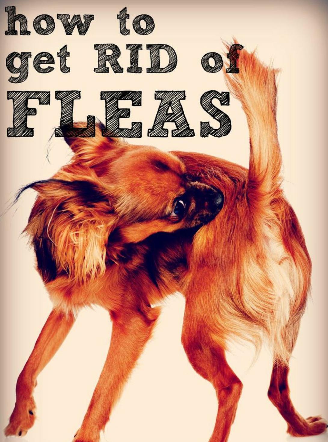 Flea and Tick Season